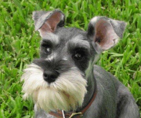 Dog Beard.jpg